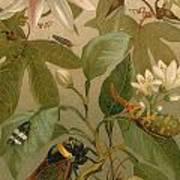 Clematis Cicada And Beetles 1894 Art Print