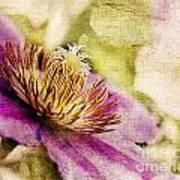 Clematis Closeup Art Print