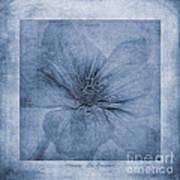 Clematis Cyanotype Art Print