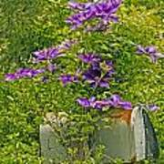 Clematis Vine On Mailbox Art Print