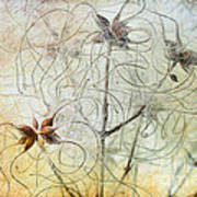 Clematis Virginiana Seed Head Textures Art Print