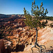 Clinging To The Edge Bryce Canyon Art Print