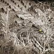 Close Crocodile  Art Print