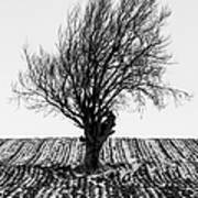 Close Tree In Snow Art Print