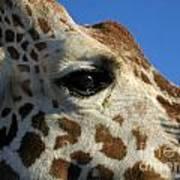 The Giraffe's Eye Art Print