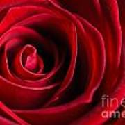 Close Up Of A Red Rose Art Print