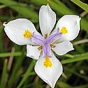 Close Up Of An Iris Art Print