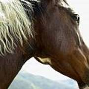 Close-up Of Brown Pinto Pony With White Art Print