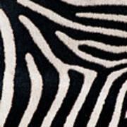 Close-up Of Greveys Zebra Stripes Art Print