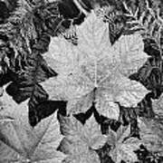 Close Up Of Leaves Art Print