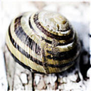 Close Up Of Sea Shell Art Print by Tommytechno Sweden