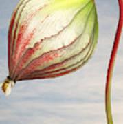 Close Up Of Triffid Flower Art Print