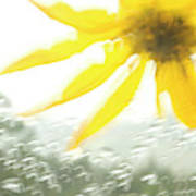 Close-up Of Yellow Wildflower In Grand Art Print