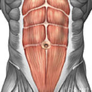 Close-up View Of Male Abdominal Muscles Art Print