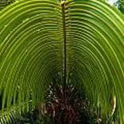 Closeup Of A Palm Tree Leaf Art Print