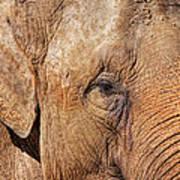 Closeup Of An Elephant Art Print