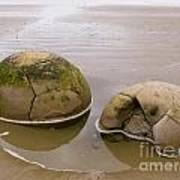 Closeup Of Famous Spherical Moeraki Boulders In Nz Art Print