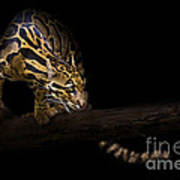 Clouded Existence Art Print by Ashley Vincent