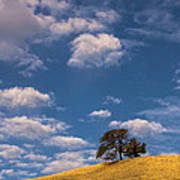 Clouds Over Lone Tree Art Print