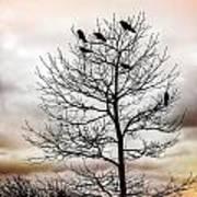Cloudy Day Blackbirds Art Print