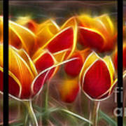 Cluisiana Tulips Triptych  Art Print by Peter Piatt