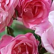 Cluster Of Pink Art Print