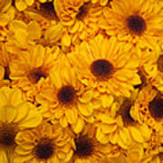 Cluster Of Yellow Blooms Art Print