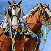Clydesdale Duo Art Print