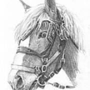 Clydesdale Horse Pencil_portrait Art Print