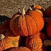 Knarly Pumpkin Art Print