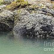 Coast Ecosystems Art Print