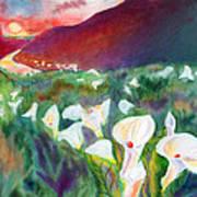 Coastal Callas Art Print