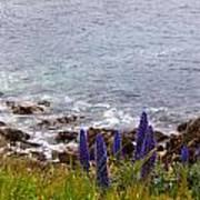 Coastal Cliff Flowers Art Print