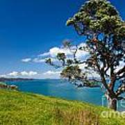 Coastal Farmland Landscape With Pohutukawa Tree Art Print
