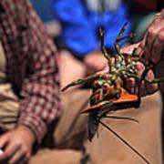 Coastal Maine Is Lobster Art Print