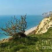 Coastal Path - West Bay To Eype  Art Print