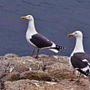 Coastal Seagulls Art Print