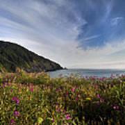 Coastal Wildflowers Of Oregon Art Print