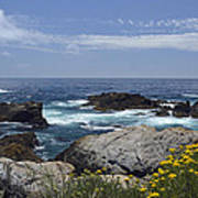 Coastline And Flowers In California's Point Lobos State Natural Reserve Art Print by Bruce Gourley