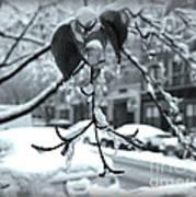 Coat Of Ice - Winter In New York Art Print