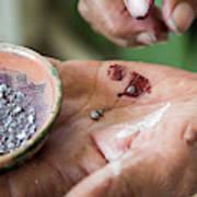 Cochineal Bugs At Cacti Farm Art Print