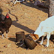 Cock N Goat Art Print