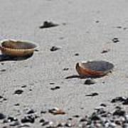 Cockle Shells On Little Island Art Print