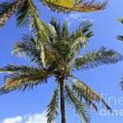 Cocoanut Palm Trees Sky Background Art Print