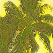 Coconut Palm Art Print