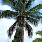 Coconut Palm Tree Art Print