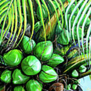 Coconut Tree   Sold Art Print
