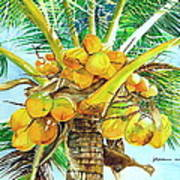 Coconut Series II Art Print