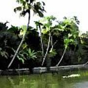 Coconut Trees And Others Plants In A Creek Art Print