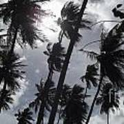 Coconut Trees In Barbados Art Print